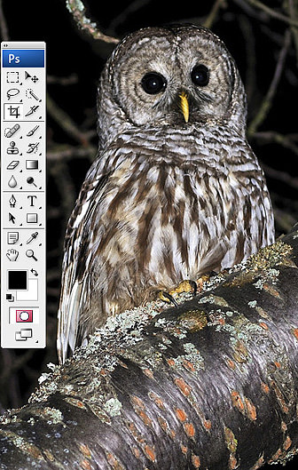 Using the 'Quick Mask' mode in Photoshop